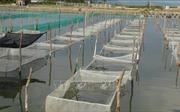 Ứng dụng công nghệ nuôi trồng hải sản bền vững - Bài 2: Lợi thế biển Việt Nam và những thách thức