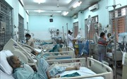 Đồng Nai: Chín người bị ong vò vẽ đốt đã được xuất viện