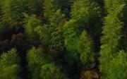 Trung Quốc – đất nước trồng nhiều cây nhất thế giới