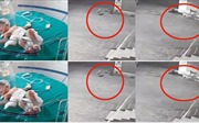 Cảm động cảnh đàn chó hoang giải cứu bé sơ sinh bị ném xuống cống