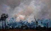 Tỷ lệ phá rừng ở Amazon tăng lên mức báo động