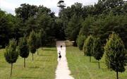 Hungary trồng 10 cây xanh khi có một trẻ chào đời