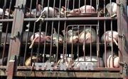 Bộ trưởng Nguyễn Xuân Cường: Kiểm soát chặt việc nhập khẩu thịt lợn để ngăn ngừa dịch tả lợn châu Phi
