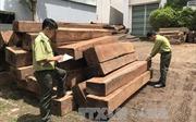 Nguồn cung 'sạch' sẽ quyết định tới thành bại của ngành chế biến gỗ