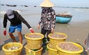 Bà Rịa-Vũng Tàu đối mặt với nhiều khó khăn trong khai thác hải sản