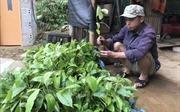 Thanh tra Dự án hỗ trợ phát triển sản xuất có nghi vấn sai phạm tại Bình Gia, Lạng Sơn
