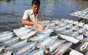 10 năm thực hiện Chiến lược biển Việt Nam - Bài 2: Khôi phục nguồn lợi thủy sản biển