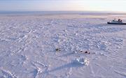 Nhóm nhà khoa học 'đóng băng' 1 năm tại Bắc Cực để nghiên cứu biến đổi khí hậu
