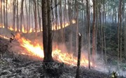 Cháy rừng trên núi Thằn Lằn thuộc thành phố Phúc Yên, Vĩnh Phúc