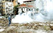 Nguy cơ dịch sốt xuất huyết bùng phát tại Ninh Thuận