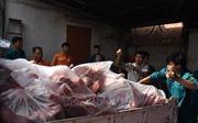 Tiêu hủy hơn bốn tấn thịt lợn nhiễm dịch tả lợn châu Phi