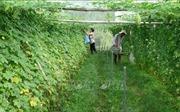 Phát triển nông nghiệp công nghệ cao - Bài 1: Vẫn tư duy sản xuất nhỏ lẻ