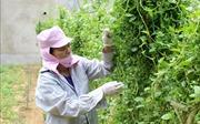 Sản xuất, kinh doanh thực phẩm an toànở huyện miền núi Quan Hoá