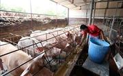 Ngành nông nghiệp đưa ra nhiều giải pháp đảm bảo các mục tiêu