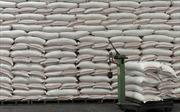 Hỗ trợ hơn 400 tấn gạo cho tỉnh Bình Định