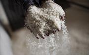 Hỗ trợ hơn 1.600 tấn gạo cho học sinh vùng khó Thanh Hóa