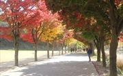 Sắc màu mùa thu Hàn Quốc