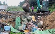 Tiêu hủy hơn 1,6 tấn nầm lợn nhập lậu,bốc mùi hôi thối