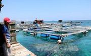Ứng dụng công nghệ nuôi trồng hải sản bền vững - Bài cuối: Những mục tiêu sẽ hướng tới