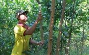 Đầu tư trên 28.500 tỷ đồng khôi phục và phát triển rừng bền vững vùng Tây Nguyên