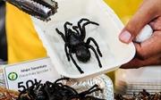'Rùng mình' thưởng thức các loại côn trùng tại TP Hồ Chí Minh