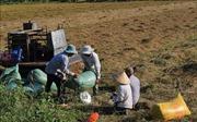 Đầu tháng 3 sẽ công bố giá và đấu thầu thu mua lúa gạo dự trữ