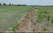 Xử lý tình trạng bán đất mặt ruộng lúa làm gạch tại Đồng Tháp