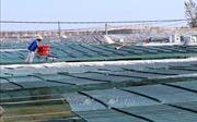 Quảng Ninh sắp có khu nông nghiệp ứng dụng công nghệ cao về thủy sản