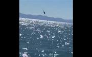 Xem trực thăng Hải quân Mexico mất kiểm soát lao sầm xuống biển