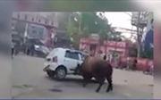 Kinh hoàng bò điên húc ô tô