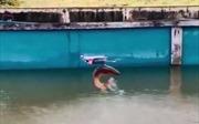 Video cá nhảy bật khỏi mặt nước để săn máy bay không người lái