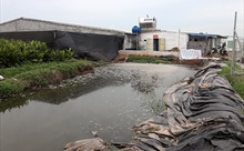 Nam Định: Lứa lợn đầu tiên gây ô nhiễm, chủ trang trại cam kết bán hết trong tháng 9