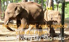 [Megastory] 'Truyền thuyết' có thật về cứu hộ voi hoang dã