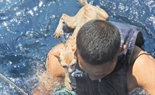 Hải quân Thái Lan vượt biển cứu mèo khỏi tàu đắm
