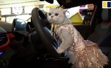'Nàng mẫu' mèo làm chao đảo thị trường xe hơi Trung Quốc