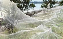 Kinh hoàng mạng nhện khổng lồ giăng kín vùng nông thôn ở Australia