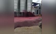 Rỏ rỉ bồn chứa, 50.000 lít rượu vang nhuốm đỏ mặt đất