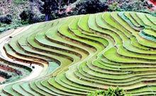 Ruộng bậc thang - bức tranh nghệ thuật nơi vùng núi Sơn La